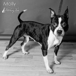 Griffin Pond Animal Shelter Pet of the Week, Molly, seeks forever home