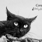 Griffin Pond Animal Shelter Pet of the Week, Coral, seeks forever home