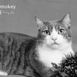 Griffin Pond Pet of the Week, Smokey, seeks forever home