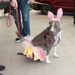 Gibbons Ford to host Easter Bunny pet photos benefiting Griffin Pond Animal Shelter