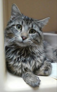 Griffin Pond Animal Shelter Pet of the Week, Falcon, seeks forever home