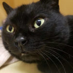 Griffin Pond Animal Shelter Pet of the Week, Suki, seeks forever home
