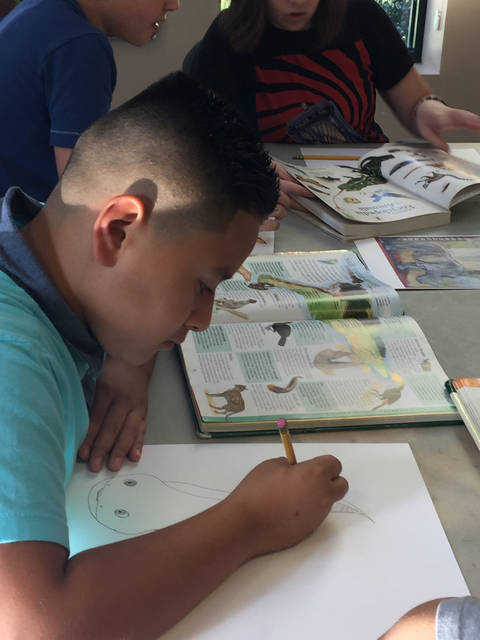 Michael Bellucci, 11, of Factoryville draws an electric eel at 2-D and 3-D Animals with the Everhart Museum, a class at the Dietrich Theater.