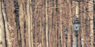 Jackie Gruzenski of Clarks Green takes a winter walk at South Abington Park.                                  Elizabeth Baumeister   For Abington Journal